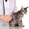Ветеринарные клиники в Омске